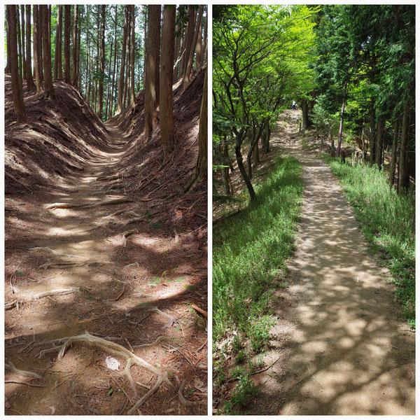 京都一周トレイル 北山東部コース