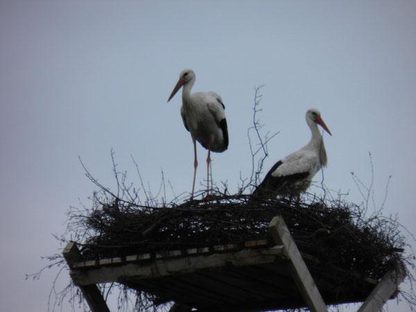 30.April Paarung