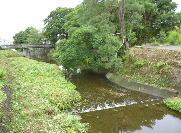 """草ボウボウが「散髪」され、左右の護岸や川原もスッキリ。(箕面川・石澄川合流点付近。正面は""""センダンの大木"""")"""
