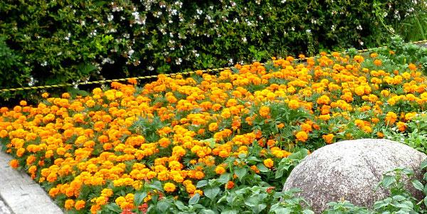 公園の育ったお花もにこやかに・・・。