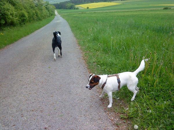 Heute einen langen langen Spaziergang mit Kleo, Diana, Thomas und meinem Frauchen gemacht