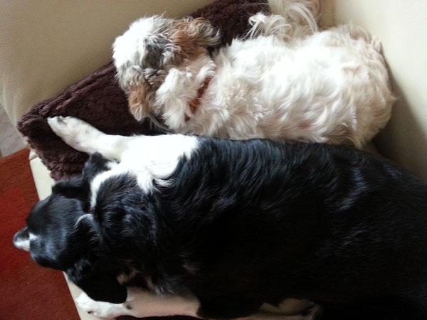 Mein Lenchen und ich beim Mittagsschlaf. Müssen uns von einem Eschwege-Trip erholen.