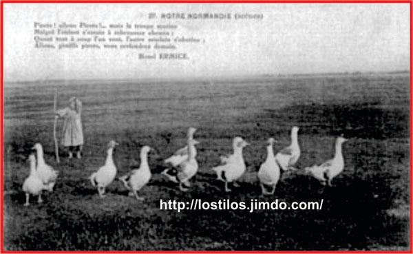 ANTIGUA FOTO-POSTAL DE PASTORA DE OCAS DE NORMANDIA