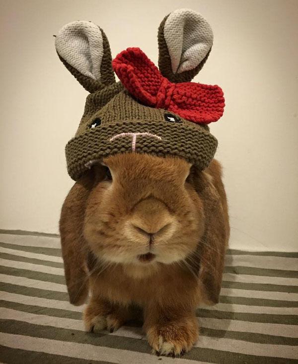 Conigli nani, minilop, coniglietti da compagnia, Roma, Napoli, Milano, allevamento congili nani