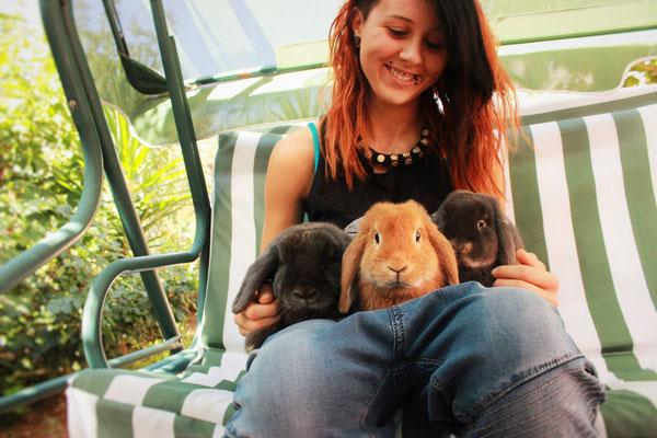 Coniglio nano ariete giarra bianca blu  fulvo blu Roma mini lop coniglietti da compagnia
