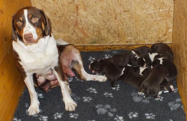 Cleo, Appenzeller Sennenhund mit Welpen