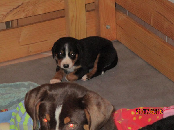 Wir haben ihr den Namen Cilia gegeben, zukünftig soll die Kleine Clea heißen.
