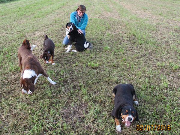 Appenzeller Sennenhunde Rudel aus dem Flößerdorf von Kirsten Becker