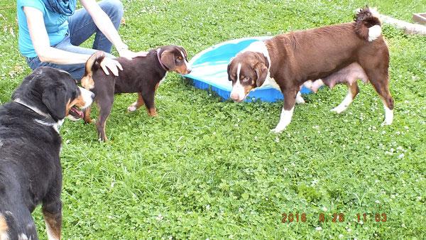 Schon zwei Tage nach der Geburt ihrer Welpen wollte Cleo zwischendurch zu unseren anderen Hunden.