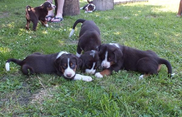 Bente, Betsy und Bonnie