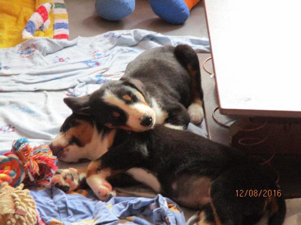 Crispin schläft auf seinem Bruder Casper