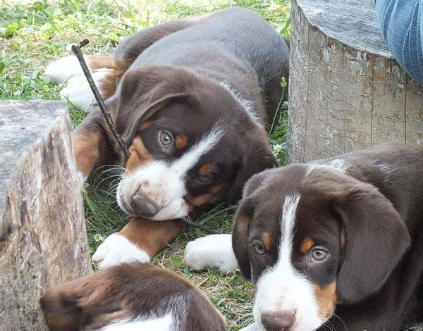 Bonnie und Betsy aus dem Flößerdorf