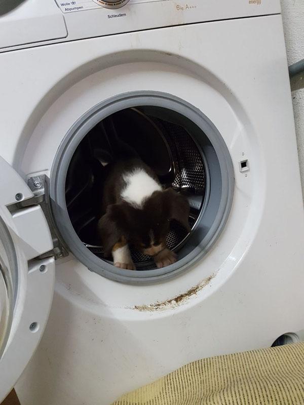 De Gustav hat da was falsch verstanden, als ich gesagt habe, dass wir noch Wäsche waschen müssen