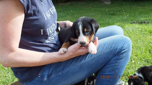 Appenzeller Sennenhund aus dem Flösserdorf