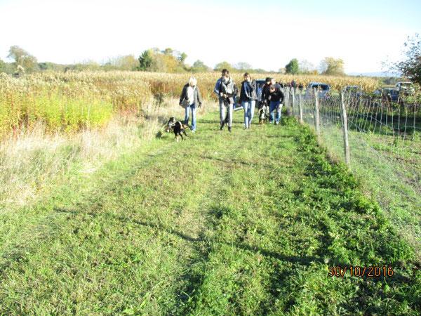 Welpentreff C-Wurf, Appenzeller Sennenhunde aus dem Flößerdorf