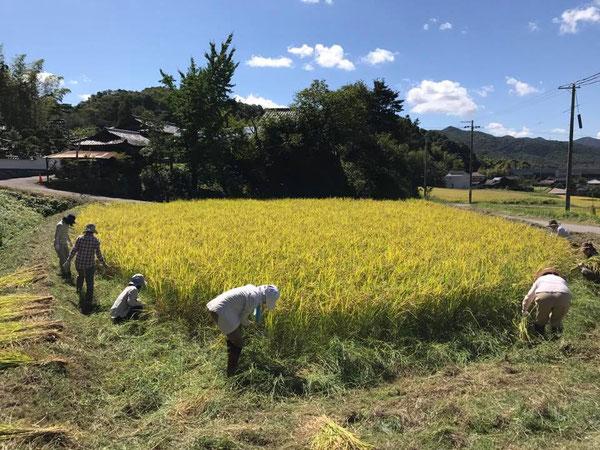 写真:稲刈りの風景。淡河は神戸市のなかでも農村地域で自然にあふれています。