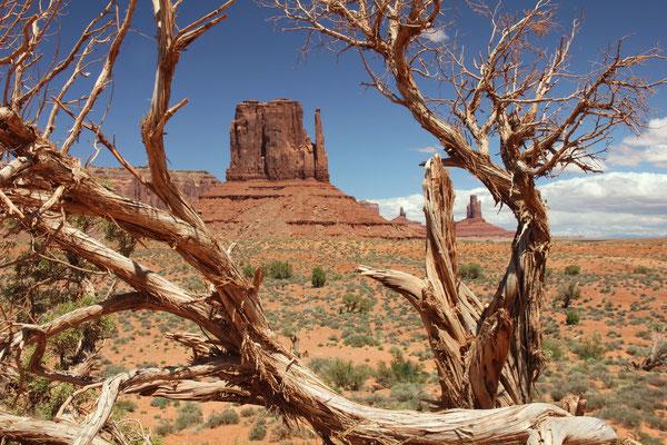 Foto: Im Monument Valley