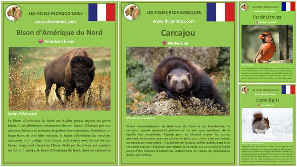 fiches animaux du canada et du quebec pdf a telecharger et à imprimer pour l'ecole ou la maison