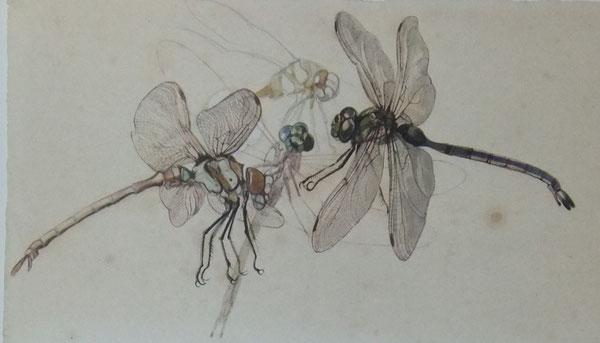 dibujos naturalísticos iluminados con acuarelas de la Colección de la Casa Museo Benlliure