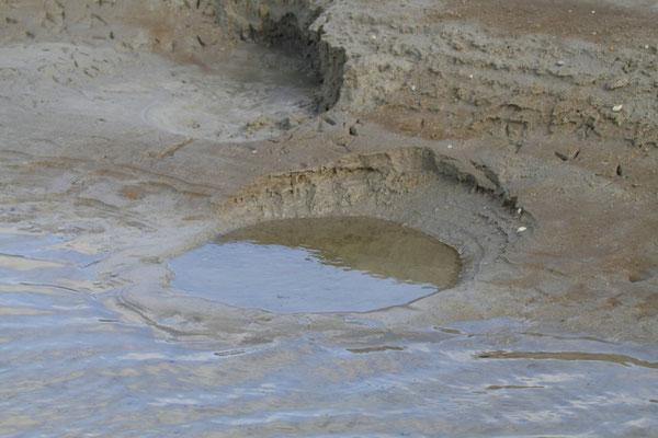 """Cratère creusé par un tadorne effectuant le """"foot-trembling"""" en recherchant sa nourriture (Photo J-M L)"""
