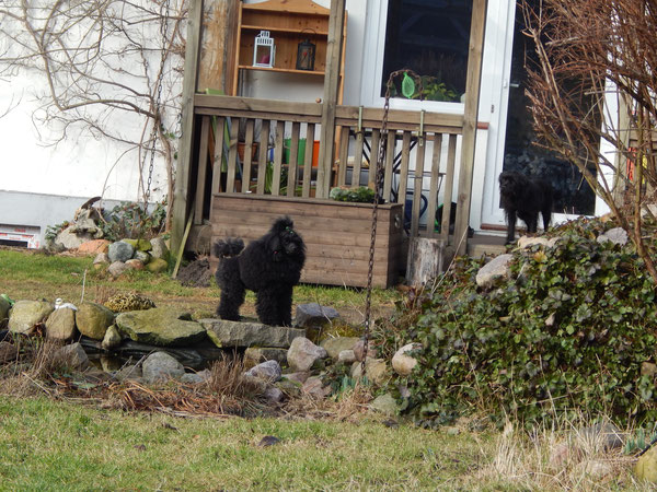 RieKe vorne & Hardy auf der Veranda