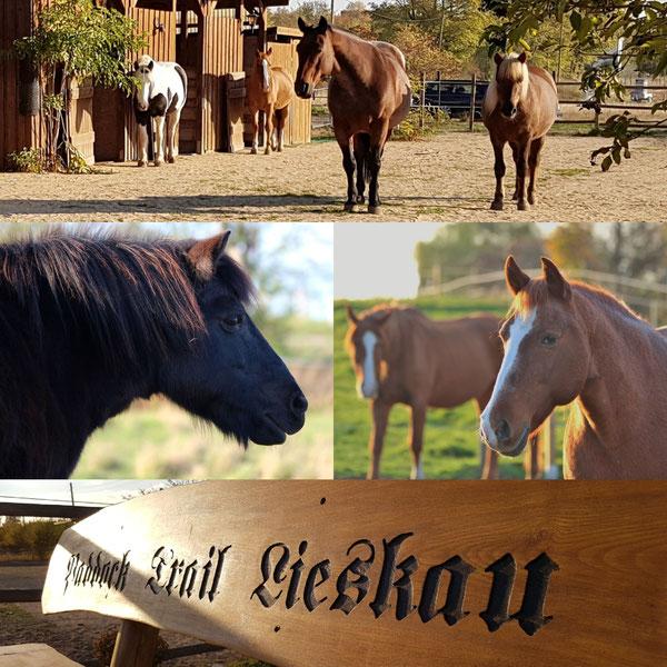 Paddock Trail Lieskau Pferd Bolivar