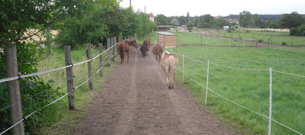 Laufwege - Paddock Trail Lieskau