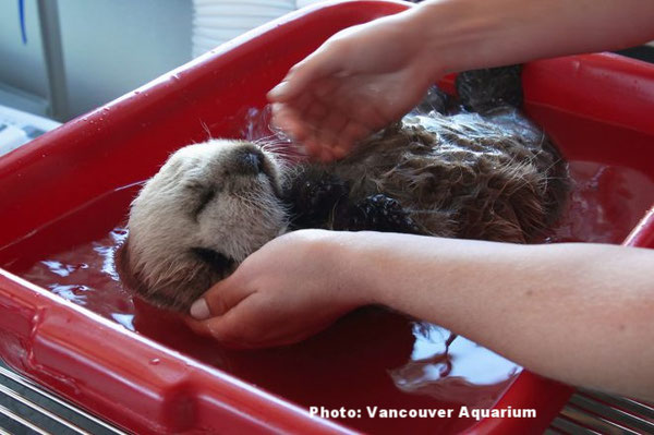 保護されてから初めて保護センターで水浴びをするハーディ