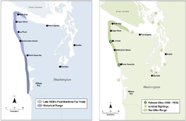 (左)Figure 3a. ワシントン州におけるラッコの歴史的生息域(Scheffer 1940, Lance et al.2004より)  (右)Figure 3b. 現在のワシントン州のラッコの分布域、1969年及び1970年の再放流場所とワシントン州における目撃場所(Lance et al.2004より) ※クリックで拡大