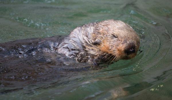 © Vancouver Aquarium
