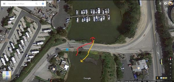 行きは黄色の線、帰りは赤い線を通って道路を渡っていた。近所の方が水色の×印の場所にSeaOtterCrossing(ラッコ横断中)の看板を立ててくれた