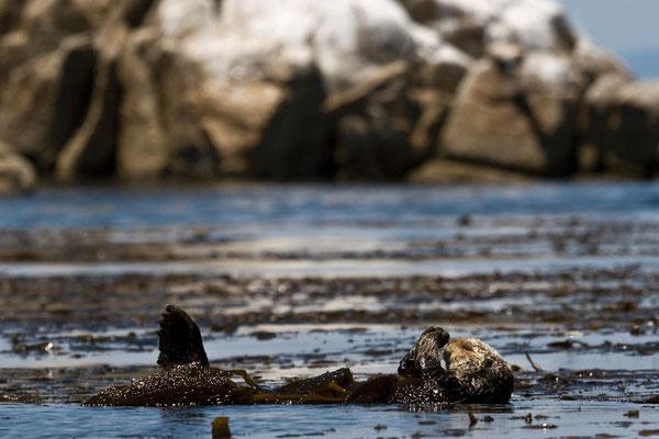 Photo by Nicole LaRoche , U.S. Geological Survey