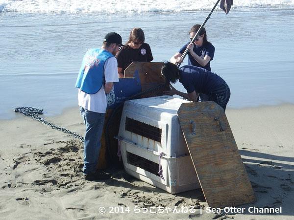 衰弱したカリフォルニアアシカを保護する海洋哺乳類保護センターのスタッフ