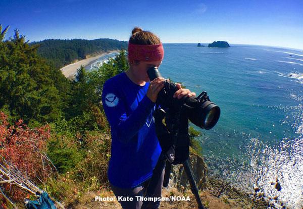 夏の間、ヘイルはオリンピック国立海洋保護区でラッコがエサを取るのを観察して過ごした。Photo: Kate Thompson/NOAA
