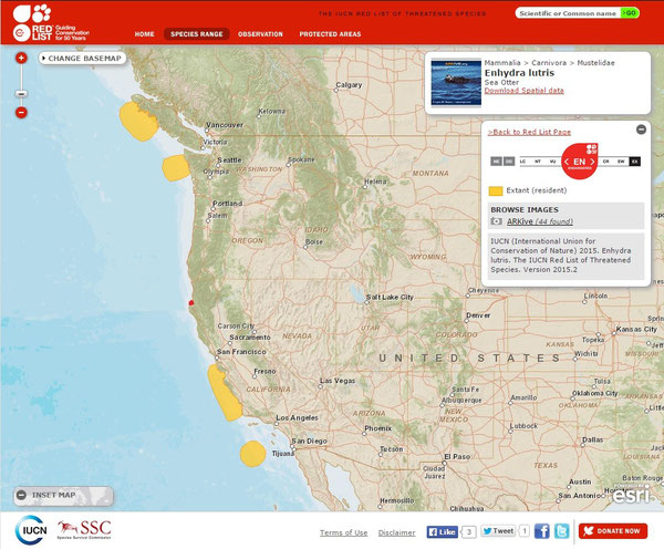 黄色部分がラッコの生息が確認されている地域。南(カリフォルニア沿岸)のほうがカリフォルニアラッコ、北(ワシントン州、ブリティッシュコロンビア州)のほうはアラスカラッコの生息域。赤丸が今回発見されたハンボルト湾。IUCN Red List Species Range Map