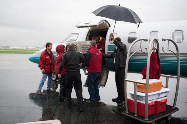 2頭のラッコの子どもたちがロンドン・エア・サービスの機体でバンクーバーへ到着 Photo:Vancouver Aquarium