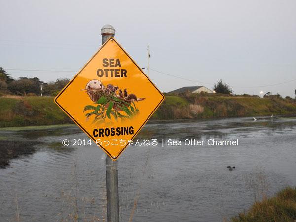 近所の方が立ててくれた看板。奥の湿地帯で浮かんでいるのがエサを食べているミスター・エンチラーダ。
