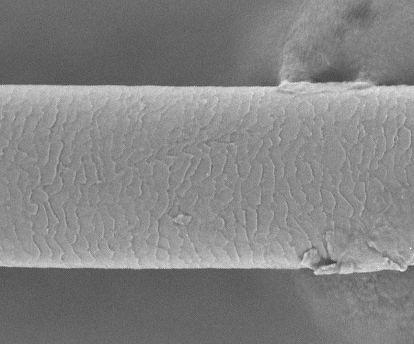 電子顕微鏡によるヒトの毛髪の画像。うろこ状の模様が見える。(ミン・グァンウェイ/カリフォルニア大学バークレー校)