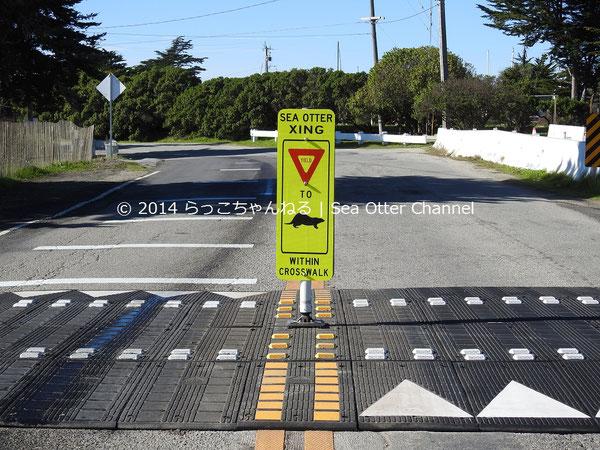 横断歩道内は「ラッコ優先」になっている。