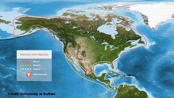 科学者は以前、古代の哺乳類はカナダからやってくるか、あるいはパナマを通って西海岸から東海岸へ移動してきたと考えていた。現在は、メキシコを通ってアメリカ大陸を横断してきたのではないかと考えている。Credit: Univerisity at Buffalo.(クリックで拡大)