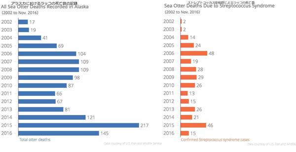 2002年から2016年11月にかけてのアラスカのラッコの死亡数の合計と同期間におけるストレプトコッカス症候群によるラッコの死亡数。アメリカ魚類野生生物局によると、このデータは回収し検死を行ったラッコの数の多くを占める。記録され検死を受けるラッコの数は限られているため、ラッコの死亡数の合計及びストレプトコッカス感染による死亡数は低く見積もられている可能性がある。Data courtesy of the U.S. Fish and Wildlife Service. CREDIT SHAHLA FARZAN