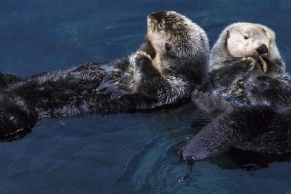モジョとアグネスの2頭は元気に過ごしている(Photo: Den Blå Planet)