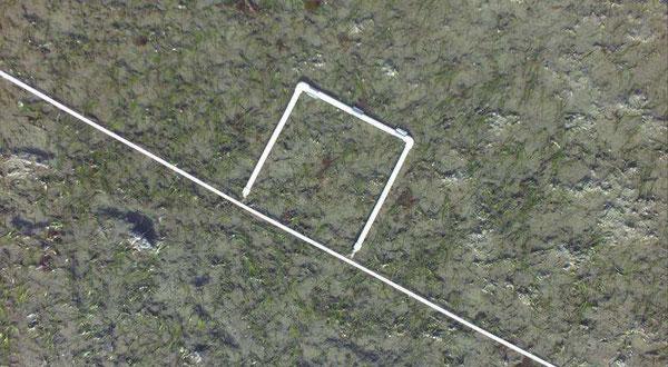 海草に覆われた浜に、計測用のPVCの枠が見える。無人航空機より撮影。Credit: ACUASI