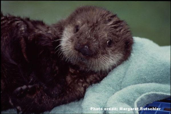 初めてバンクーバー水族館へ到着した時のエルフィン