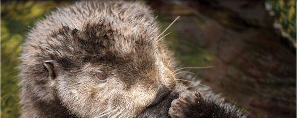 Photo:Monterey Bay Aquarium