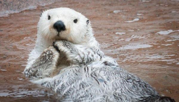 ©Point Defiance Zoo & Aquarium