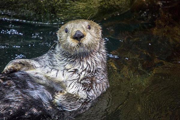 Photo Shedd Aquarium