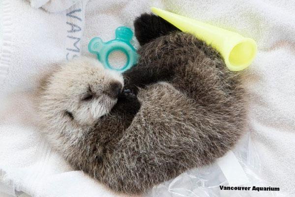 この赤ちゃんは自分の力では生きていけないため、保護センターが目下必要なケアを与えている。