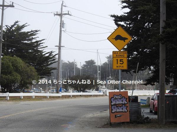 「ラッコ横断中」時速15マイル制限の正式な標識が設置されたが、スピードを守らないドライバーが少なくなかった。