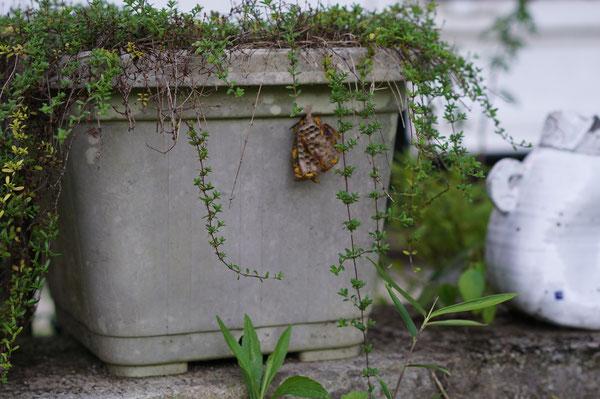 陶芸家 茨城県笠間市 ブログ 日常 蜂に刺された ポイズンリムーバー 蜂